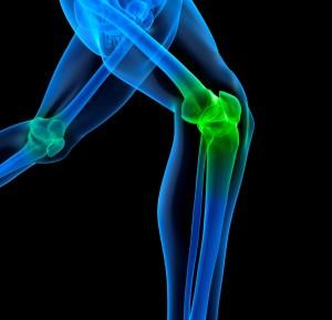 iStock_000012214665Medium Skeleton_knee joints -cropped